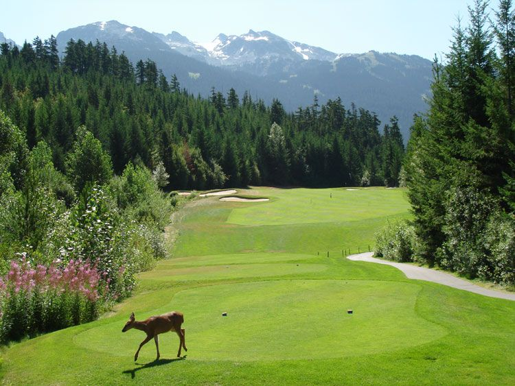 Chateau Whistler Golf