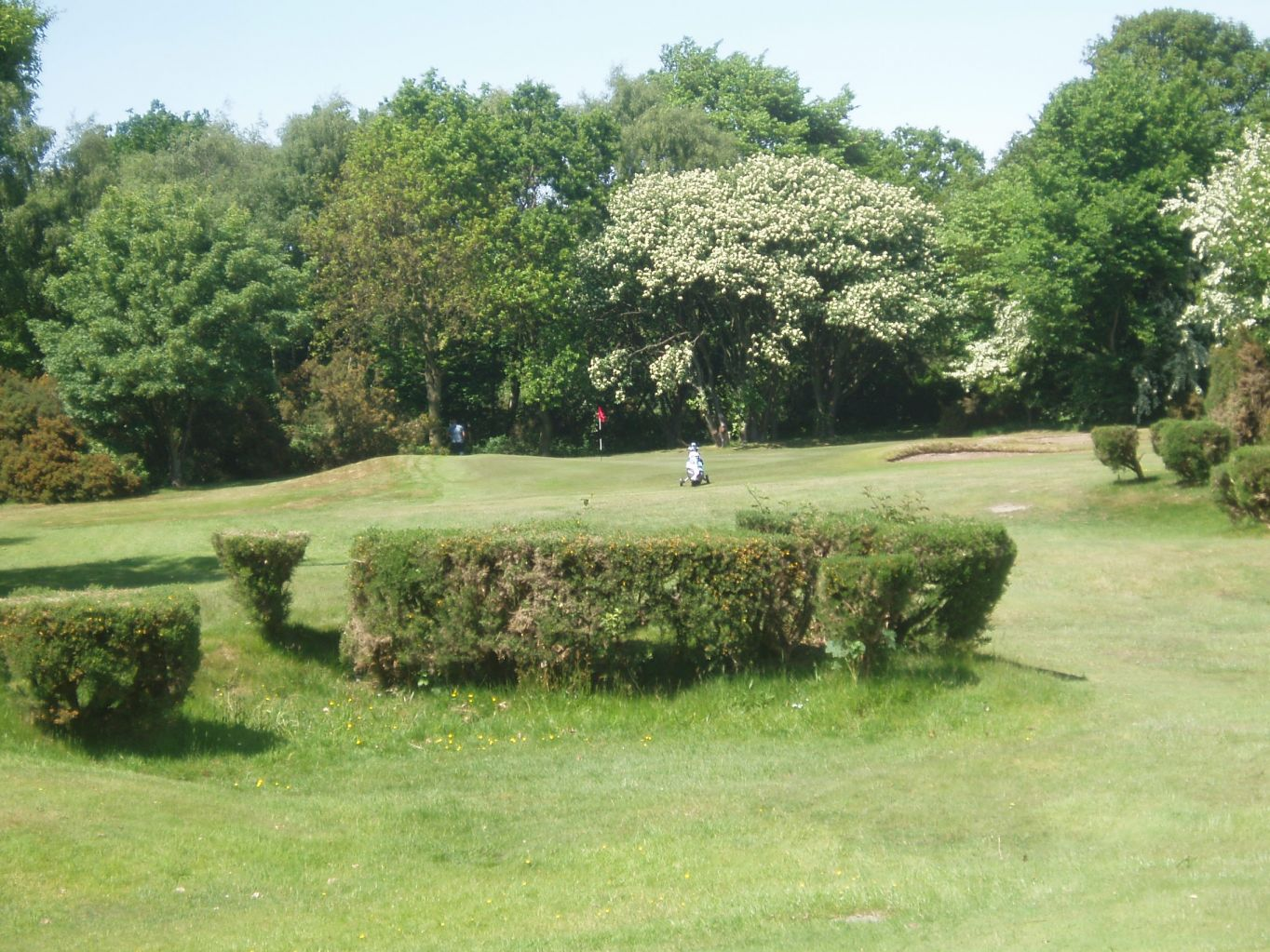 Wirral Ladies Golf Club