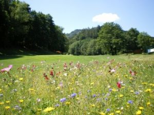 Golf d'Ammerschwihr - Green Fee - Tee Times