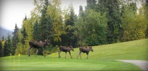 Anchorage Golf Course - Green Fee - Tee Times