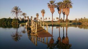 Costa Ballena Ocean Golf Club - Olivos/Palmera - Green Fee - Tee Times