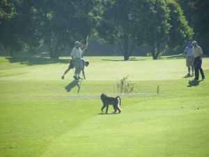 Plettenberg Bay Golf Course - Green Fee - Tee Times