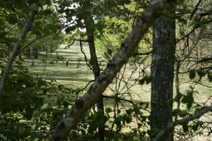 Golf de Sologne - Sologne - 18T - Green Fee - Tee Times
