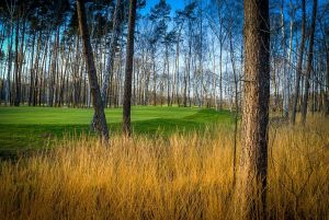 Eurovalley Golf Park - PINE (9) - Green Fee - Tee Times