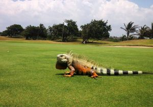 Country Club De Barranquilla - Green Fee - Tee Times